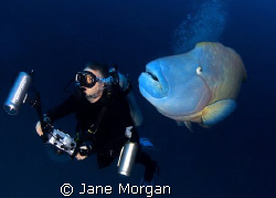 Me and my buddy. This was taken at Fish Head in the Maldi... by Jane Morgan 